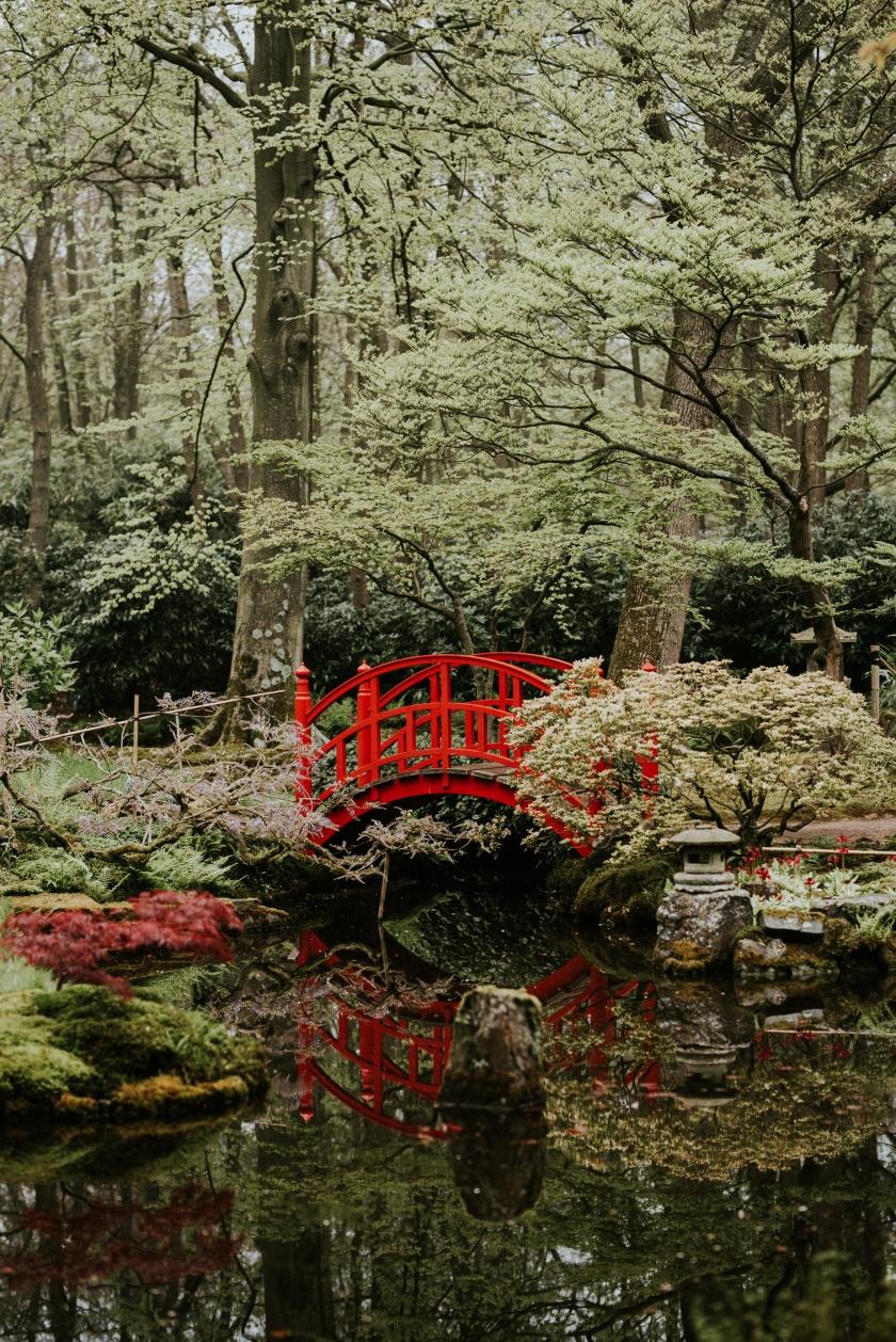Japansetuin (33 van 38)